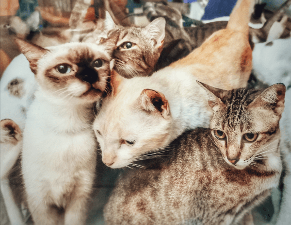 Managing your software lifecycle or PMO process- is it like herding cats?